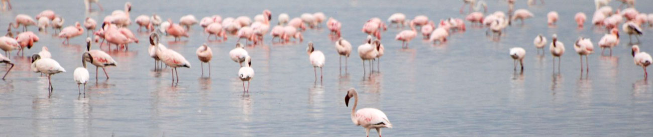 Fabulous Flamingo &amp; Mara Adventure